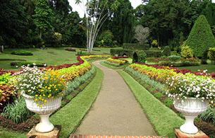 Botanical Garden Peradeniya - 19Km