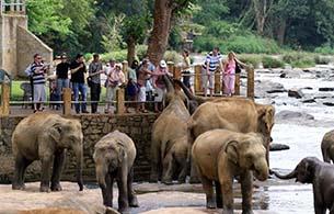 Pinnawala Elephant Orphanage - 35Km